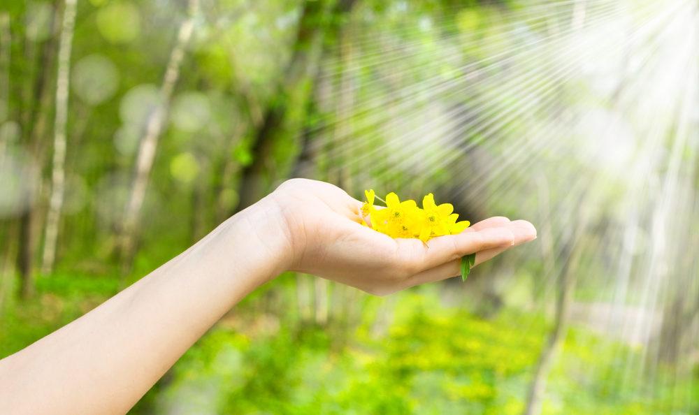 Zonnestralen schijnen licht en energie op een hand met daarin gele geplukte bloemen.